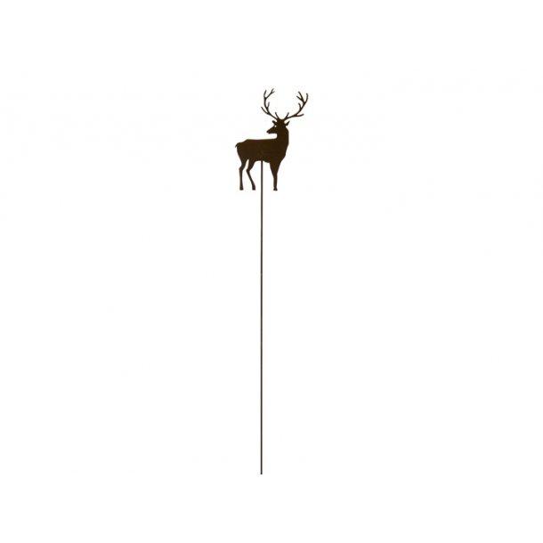 Rensdyr på spyd